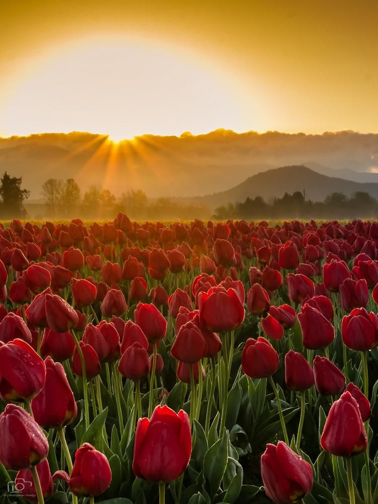 Reach for the Sun by Christopher Fridley