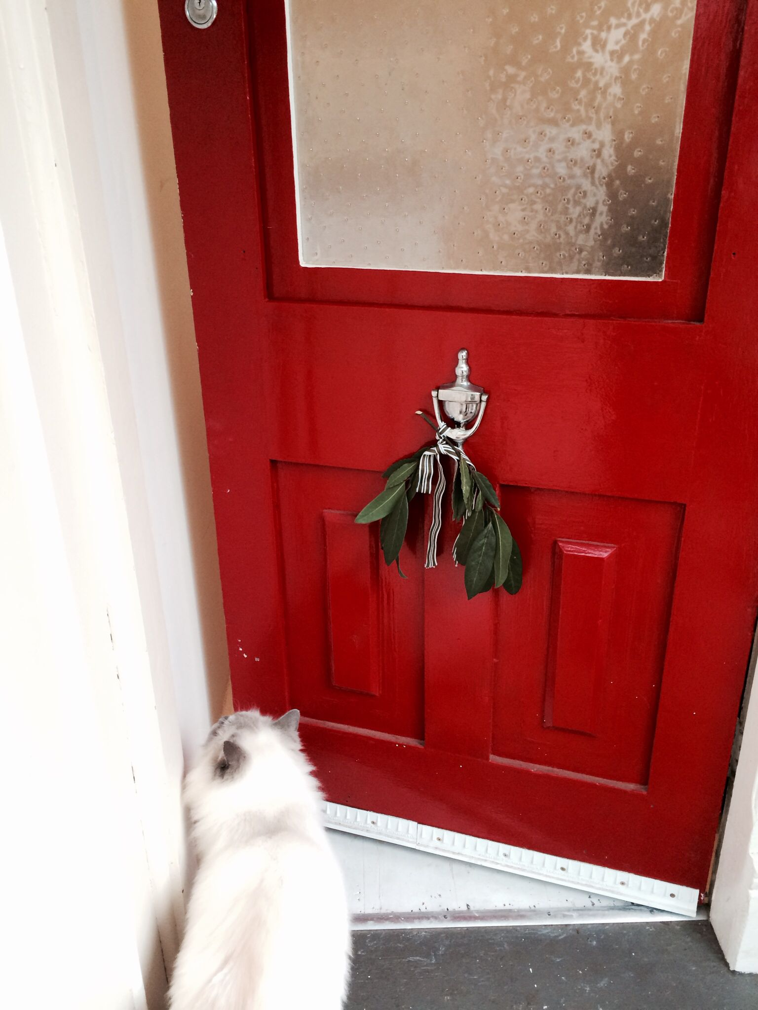 The front door well it\'s not a plant but it\'s my shiny London red ...