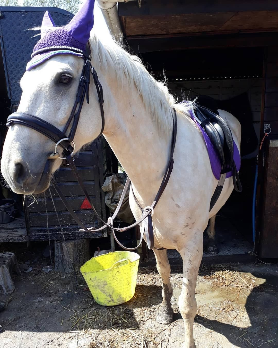 What Colour Suits My Horse? Matchy Colour Tips With Photos ...