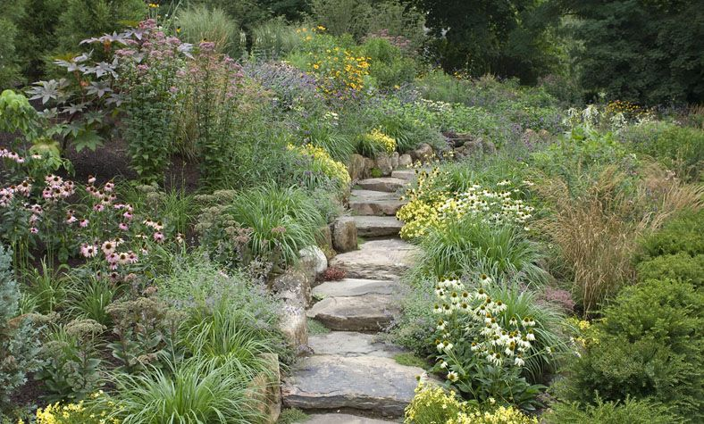 The american prairie garden on the souther slope field for William garden designs