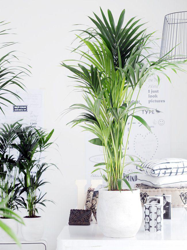 Die richtige zimmerpflanze f r das schlafzimmer garten for Grune pflanzen fur innen