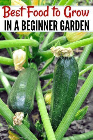 Help For gardening ideas
