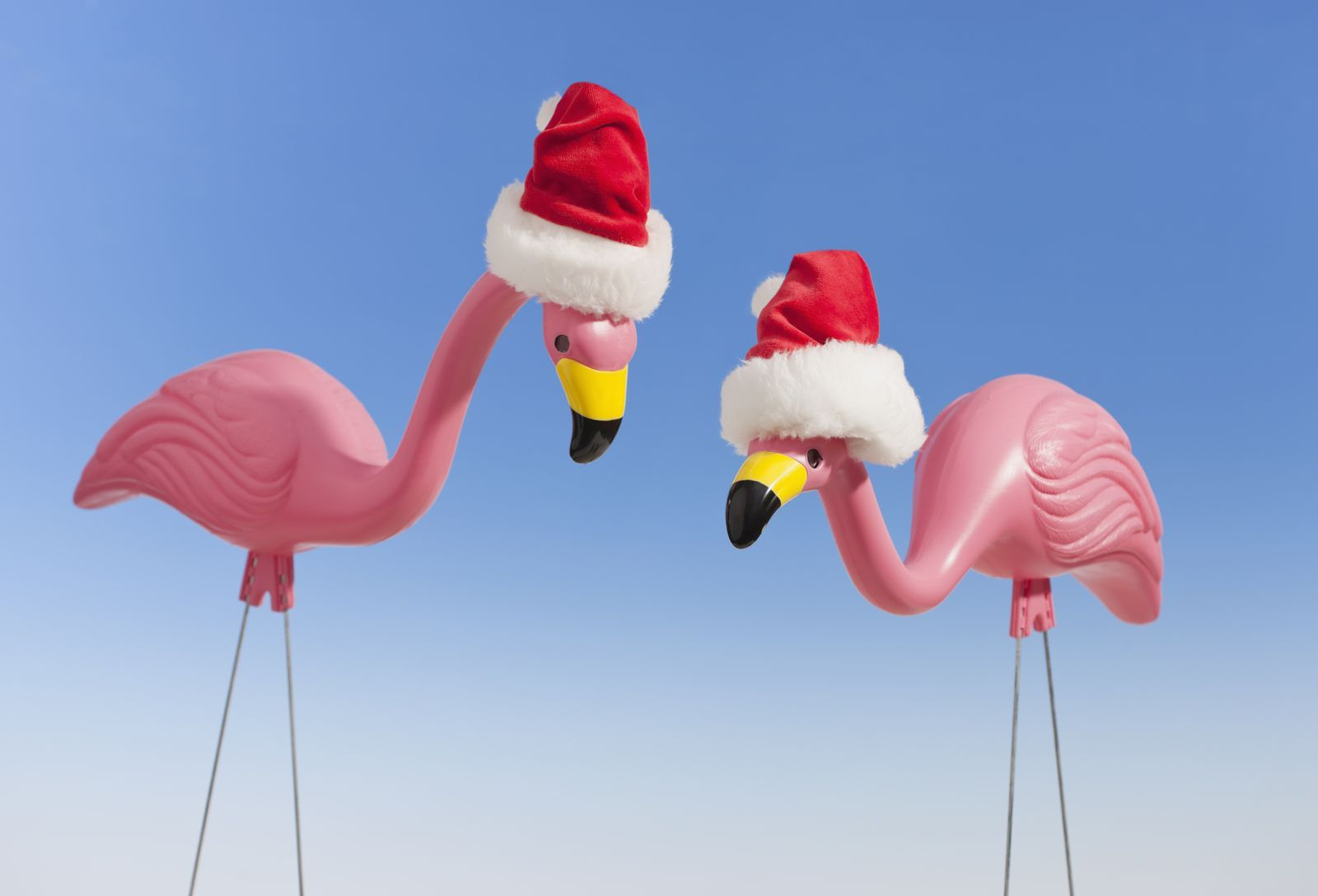 You Can Now Buy Pink Flamingos Dressed For Every Holiday—Or Mood—Imaginable is part of lawn Dress Pink - Your lawn will never be the same