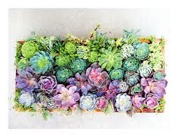vertical succulent wall - Google Search