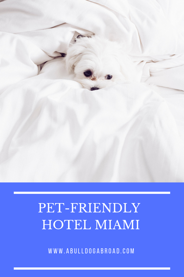 Loews Loves Pets At Miami Beach Dog Friendly And Located Right On
