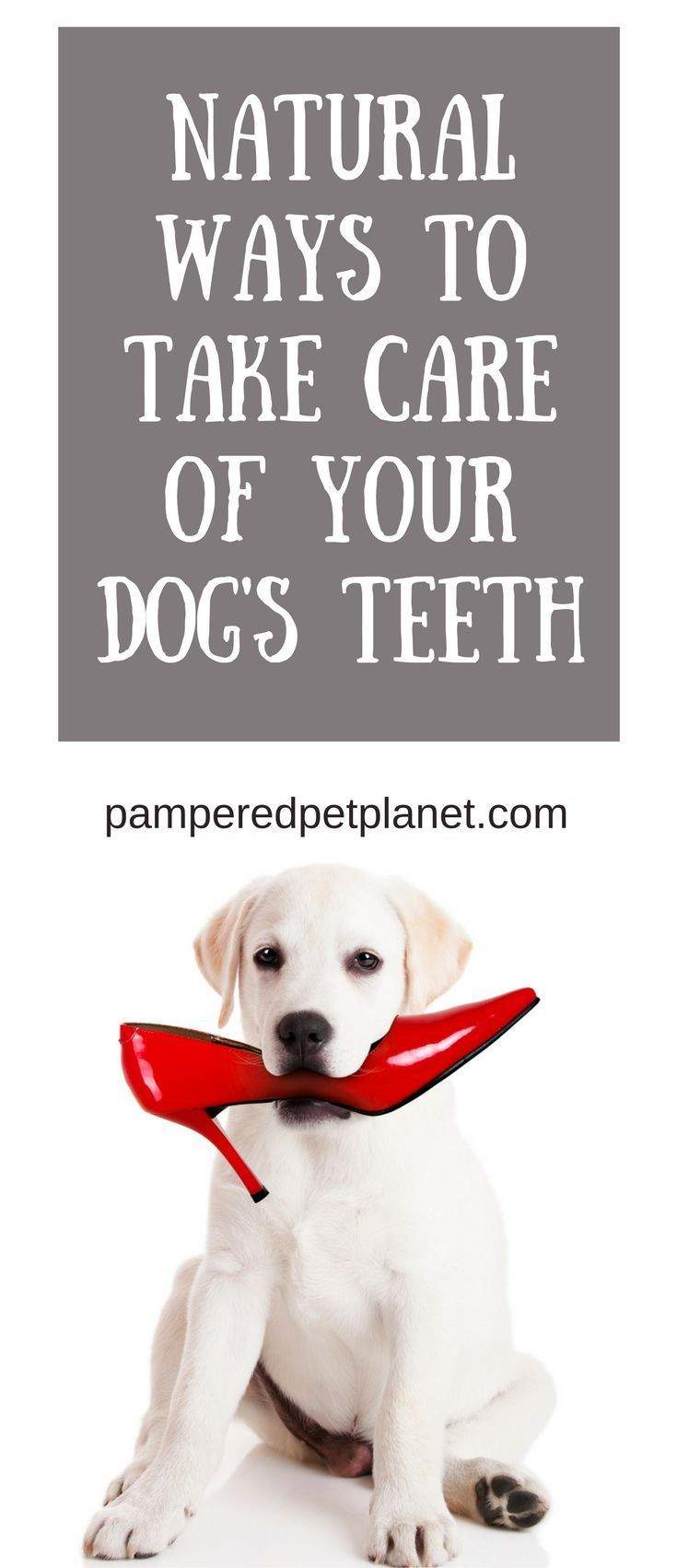 Natural Ways To Take Care Of Your Dogs Teeth Dog Daughters