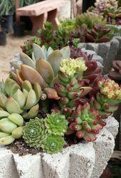 Photo of Juicy bowl www.starnursery.com #succulent #succulent # …