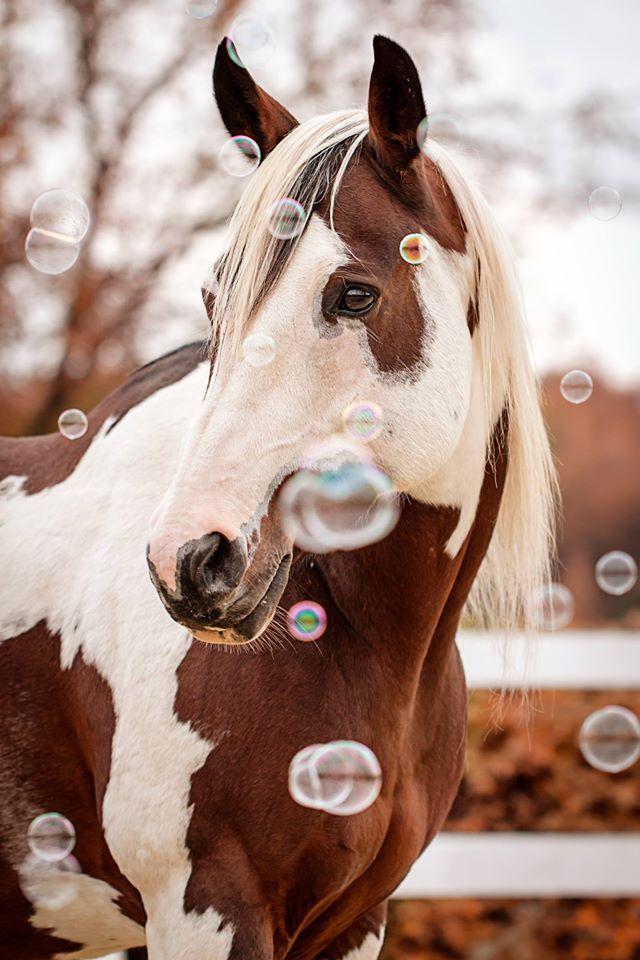 91 Nibu Photos Mensch Tier Fotografie Photos Photographie Equine Photographie Equestre Dessin Cheval