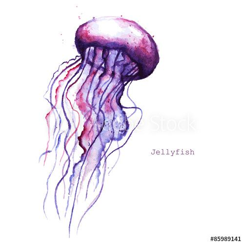 Vector watercolor jellyfish | Painting fish | Pinterest ...