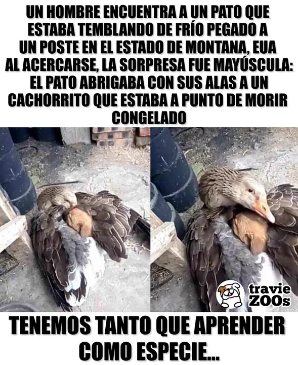 Y Ellos Son Los Animales Los Salvajes Datos Curiosos De Animales Amantes De Perros Mascotas Frases