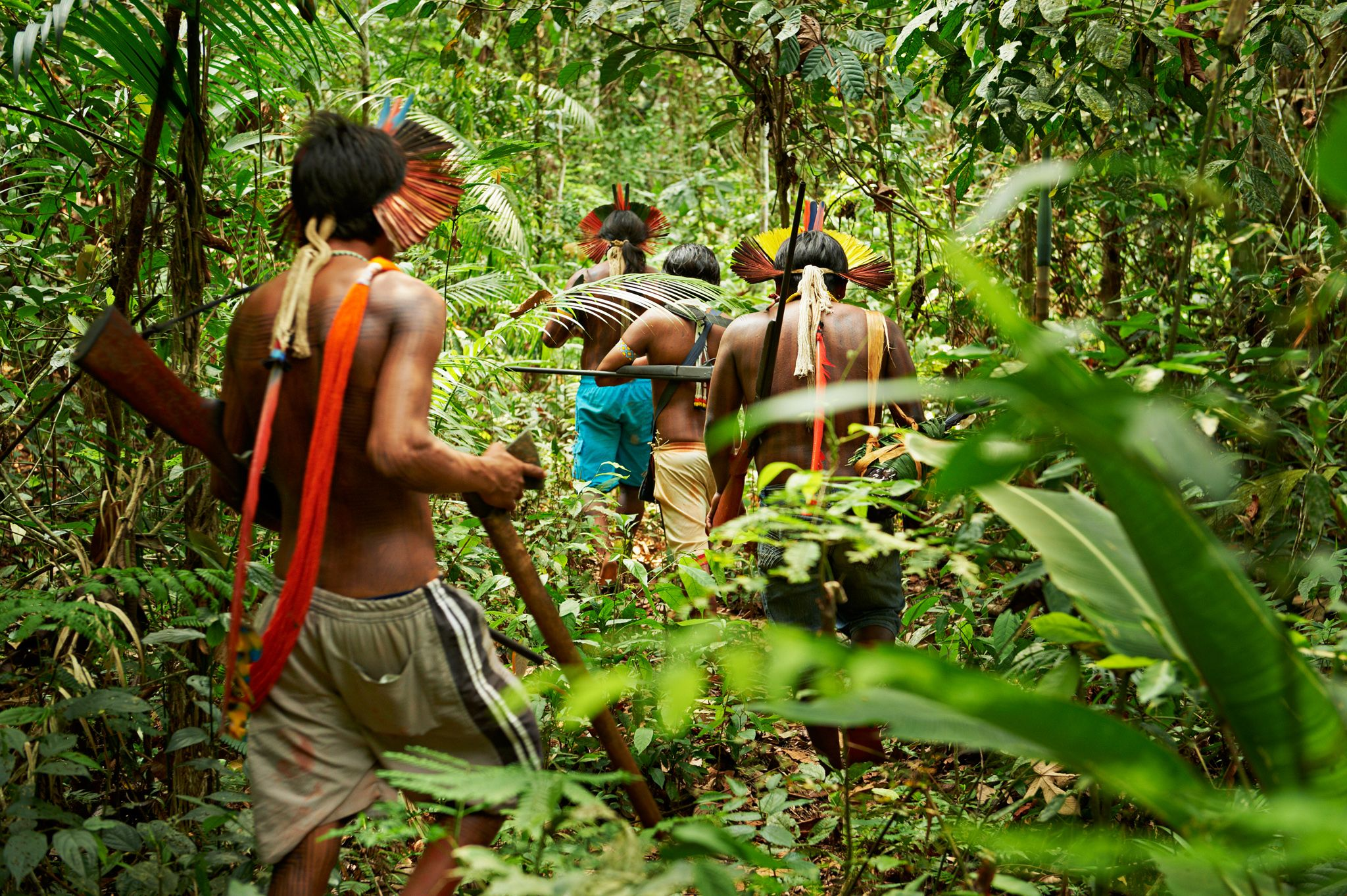 Rain Forest Warriors: How Indigenous Tribes Protect the Amazon | Rainforest, Amazon rainforest, Indigenous tribes