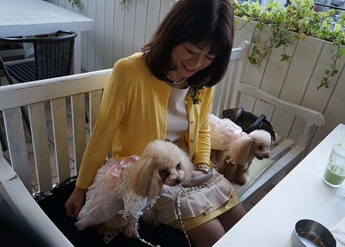 deco dog cafe tokyo, asia dog petting theme restaurant, Video clip of woman travel channel tv presenter La Carmina , in new TV show Could I Live There?. See the #travetv hosting clip at http://www.lacarmina.com/blog/2016/03/travel-channel-show-happn-app-japan/