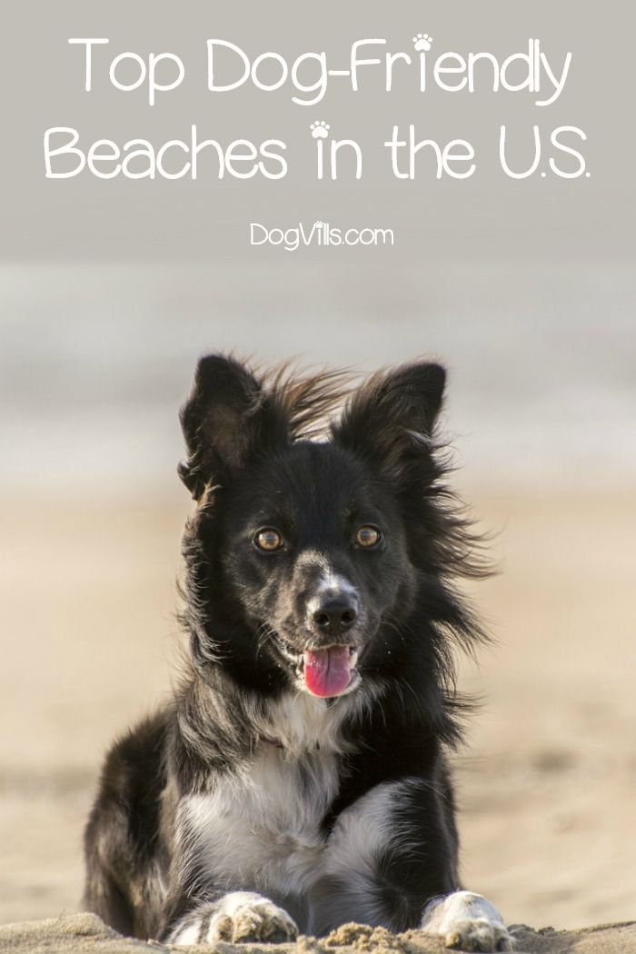 top 31 real dog friendly beaches in the us for the pets dogs dog friends pet dogs. Black Bedroom Furniture Sets. Home Design Ideas