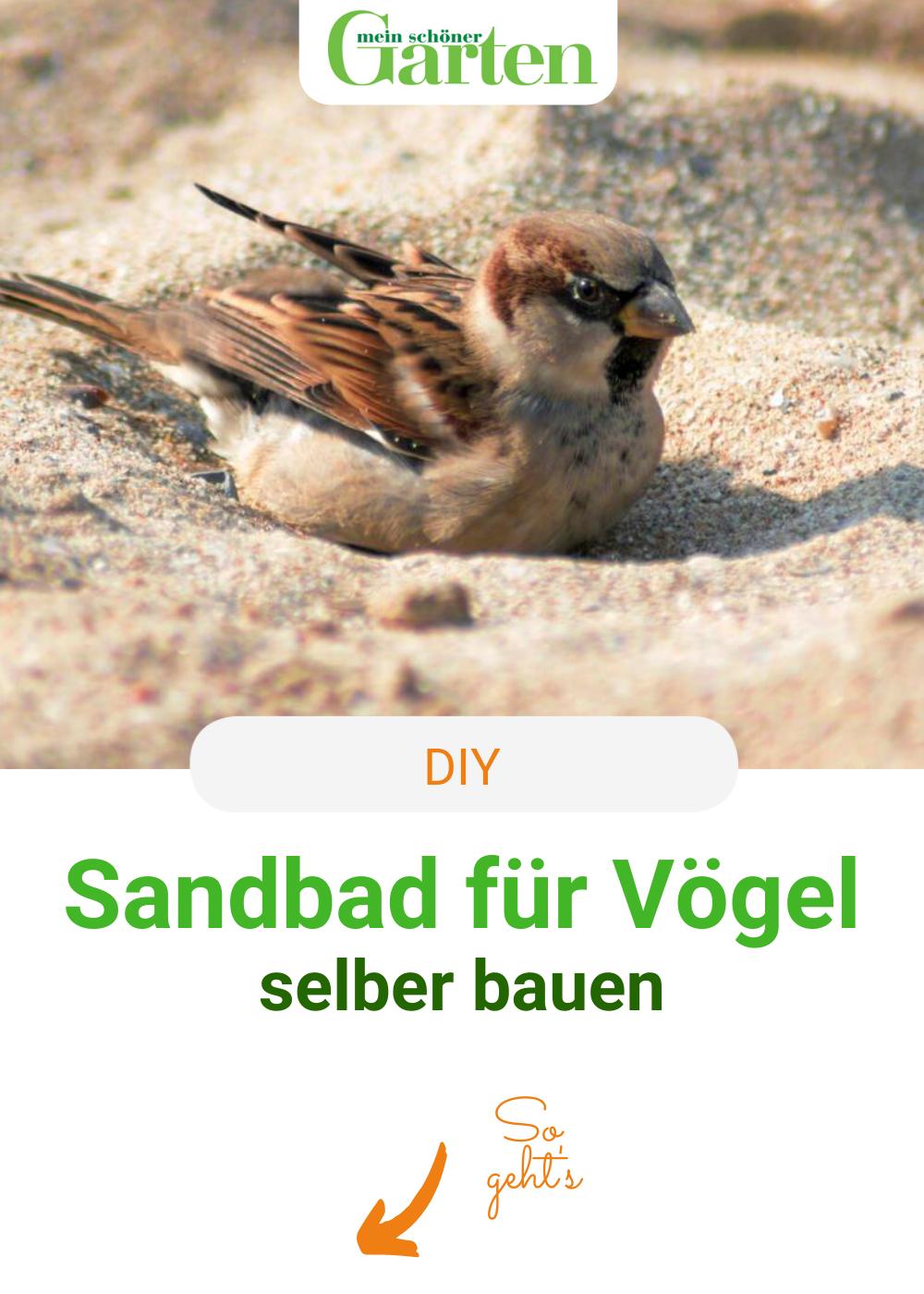 Diy Sandbad Fur Vogel Einrichten Vogelbad Garten Garten Anpflanzen Vogelbad