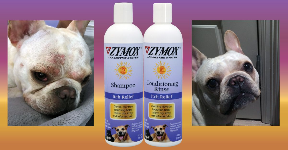 Zymox Shampoo Rinse Can Help With Skin Allergies And Infections Read More Online At Www Zymox Com Skin Allergies Pet Care Pet Health