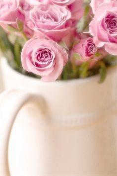 .roses