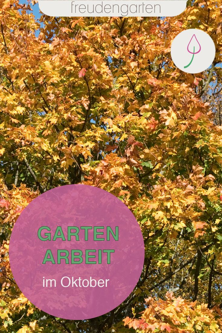 Gartenarbeit Im Oktober Garten Rosen Pflegen Gartenarbeit