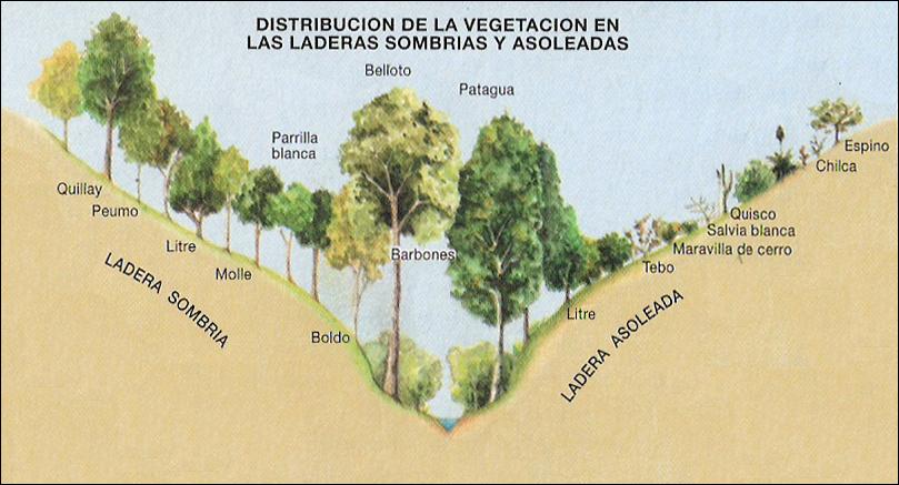 Pin En Representacion Grafica