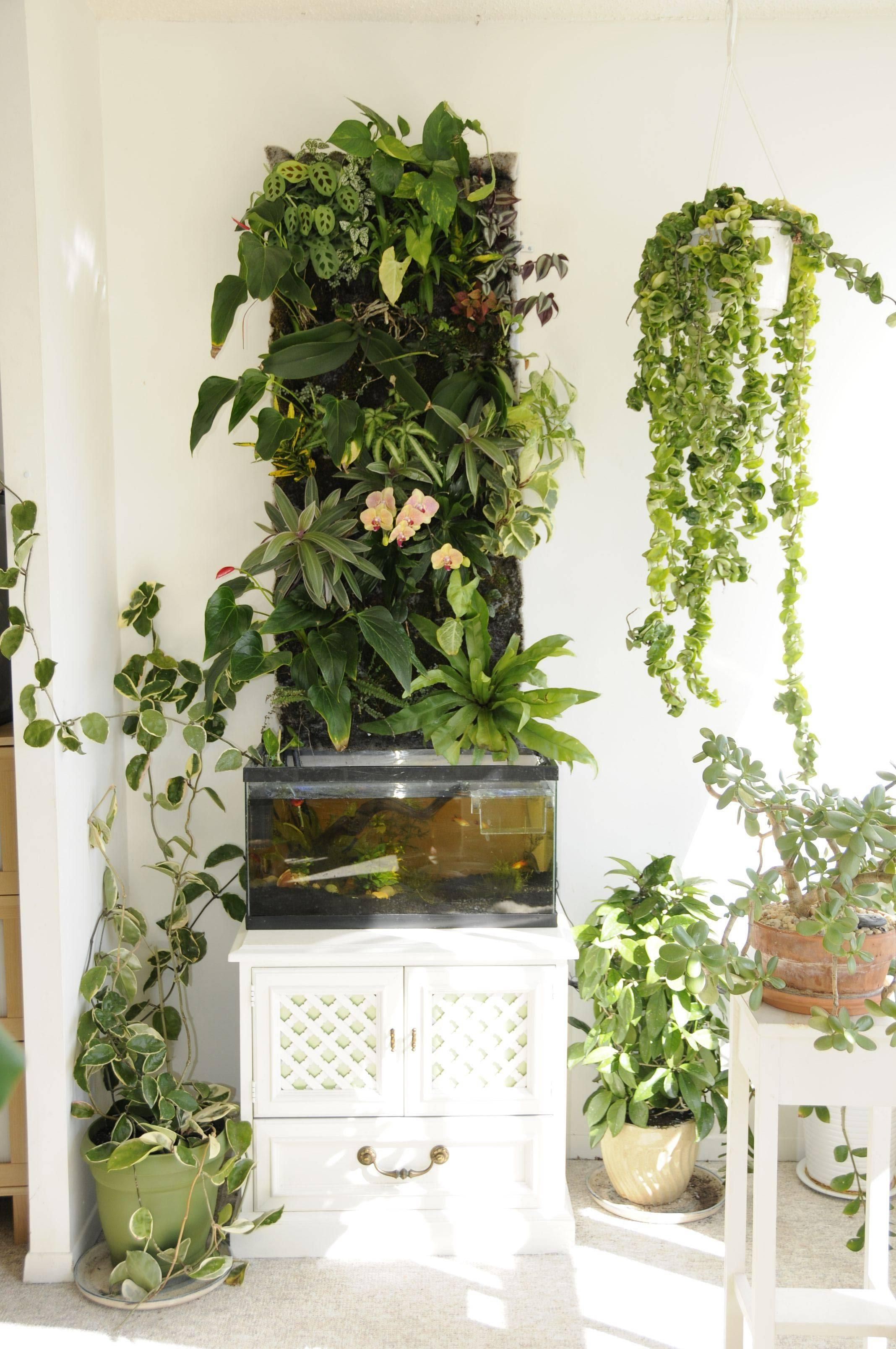 The Green Wall & Other Living Things  Imgur
