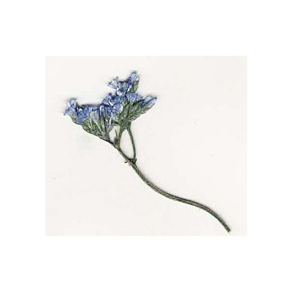 Pressed Blue Limonium - Real Pressed Flowers - Blue Pressed Dried... (39 NOK) ❤ liked on Polyvore featuring home, home decor, flowers, fillers, nature, blue home accessories, ocean home decor, blue home decor, sea home decor and floral home decor