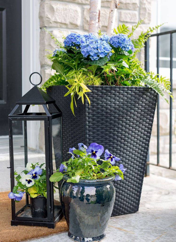 Cheap Potted Flowers