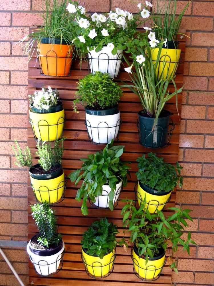 Plantes balcon de belles id es pour d corer notre for Petite plante exterieur