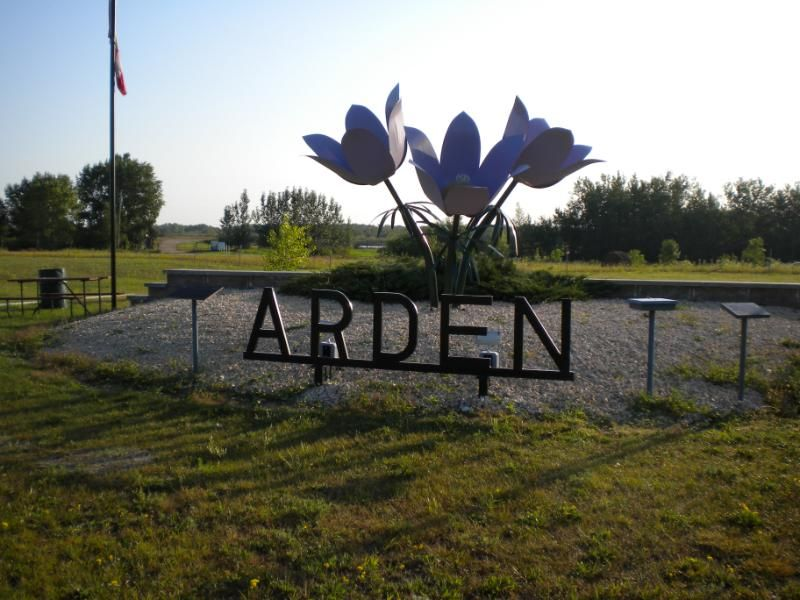 Giant Crocus at Arden, Manitoba