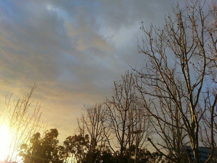 Trees enjoying the sunset