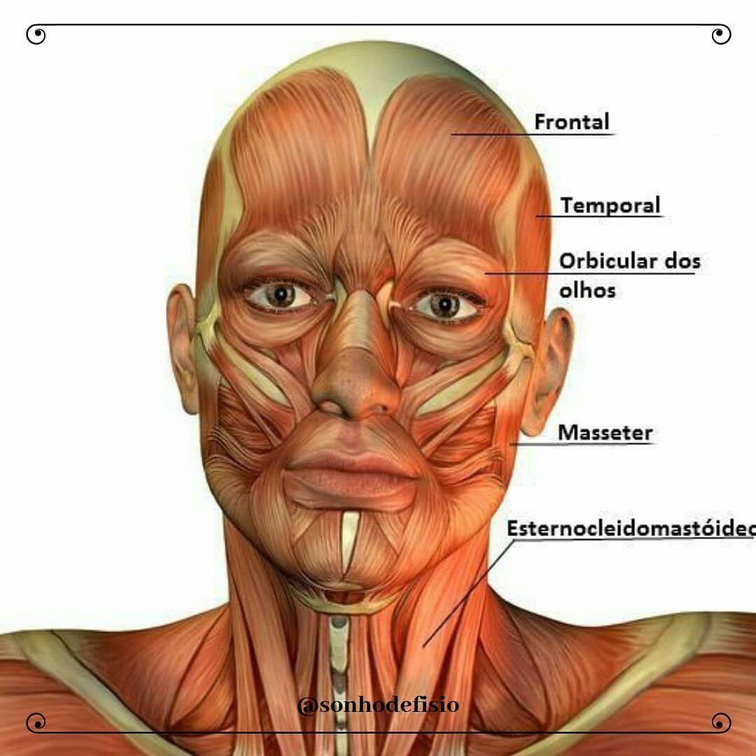 Musculos Da Cabeca E Do Pescoco Fronta Com Imagens
