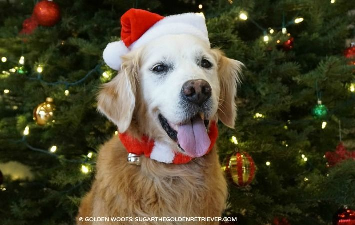 Get Your Dog Decked Out For The Holidays Petsmartgrooming Your Dog