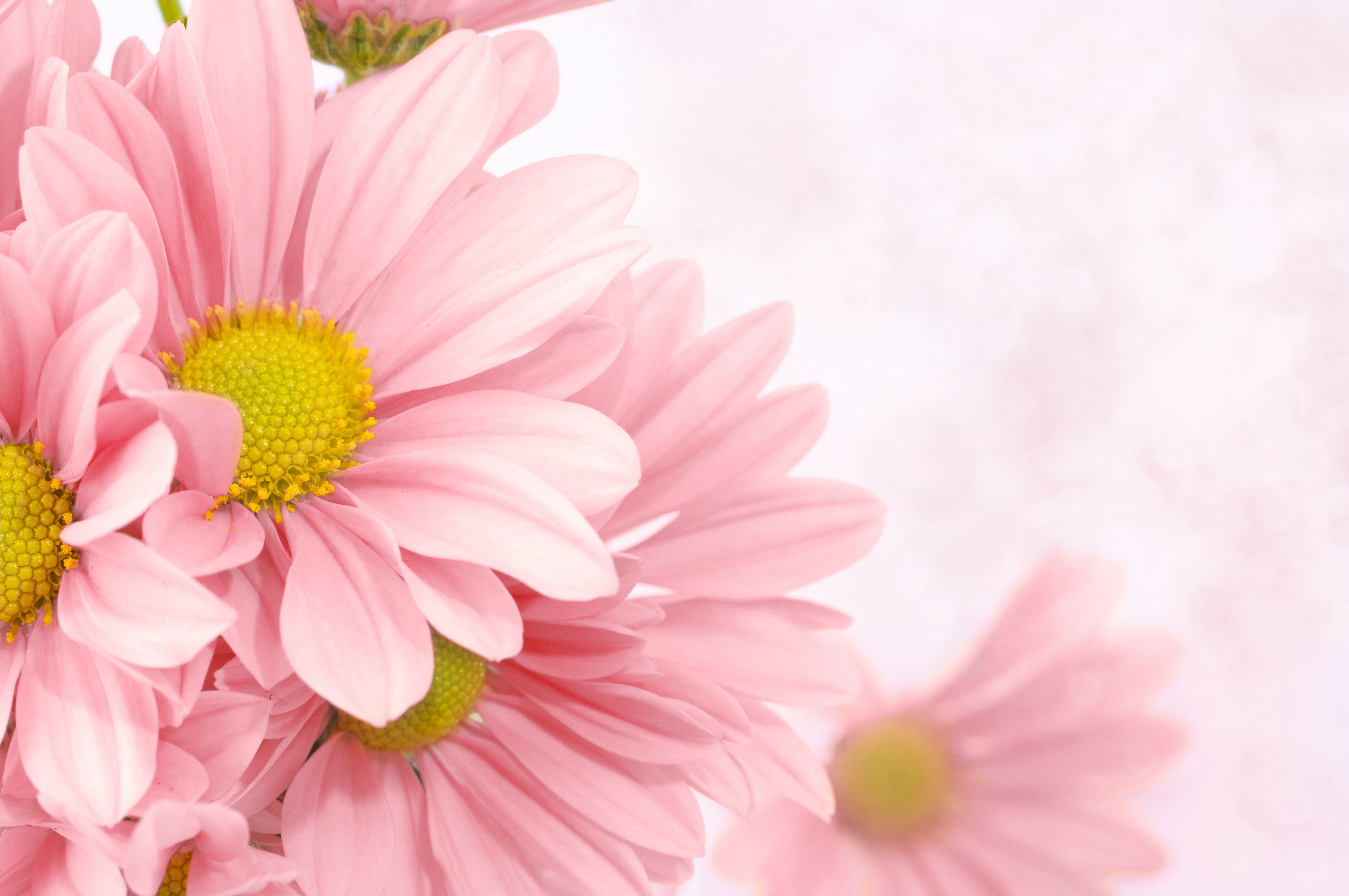 Soft Pink Floral Background Gallery Yopriceville High