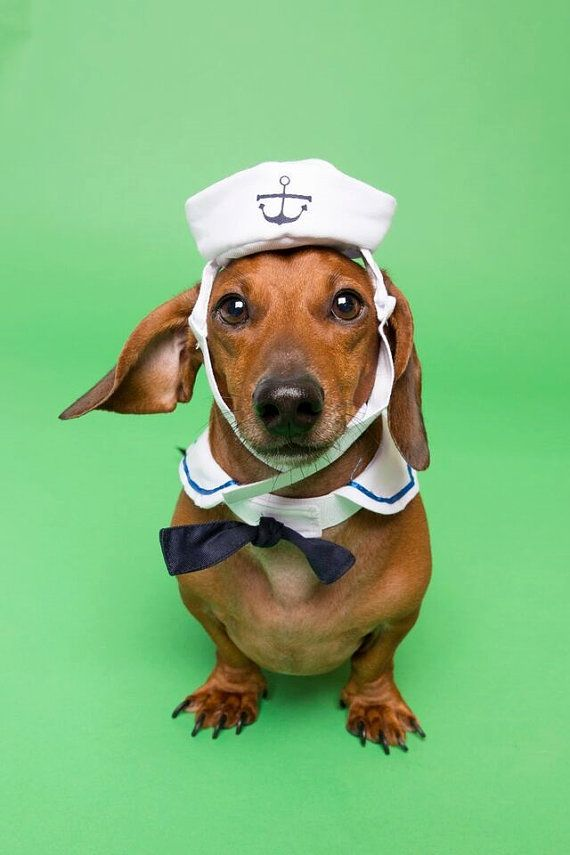 Sailor Dog Costume - Dog Sailor Hat and Sailor Collar & Sailor Dog Costume - Dog Sailor Hat and Sailor Collar | doggie hats ...