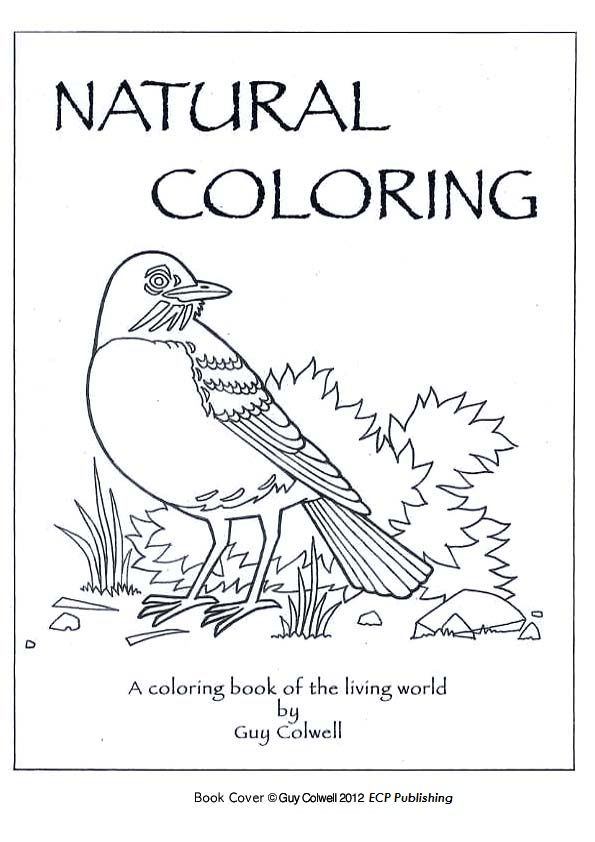 - Pin By Allison Mayes On Free Coloring Pages, Mazes, Or Puzzle Pages Coloring  Pages, Animal Coloring Pages, Abc Coloring Pages