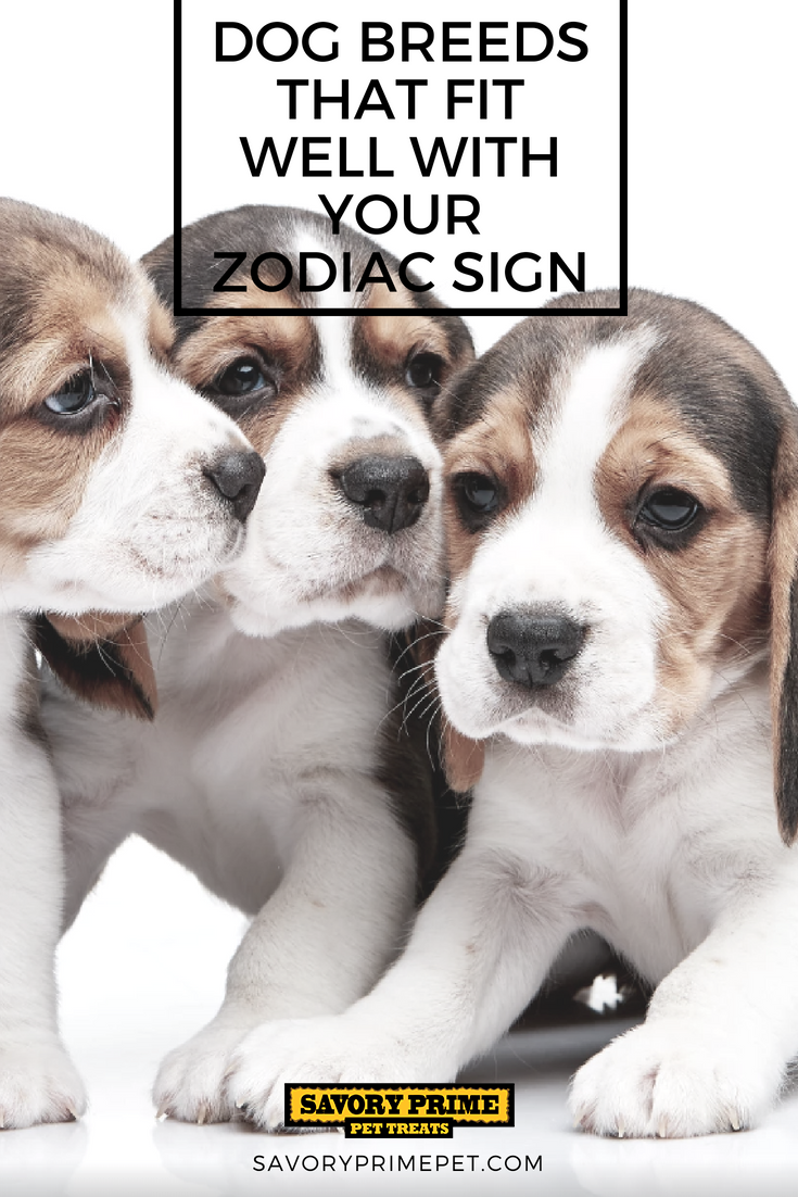 Dog Breeds That Fit Well With Your Zodiac Sign Happy Dogs Dog