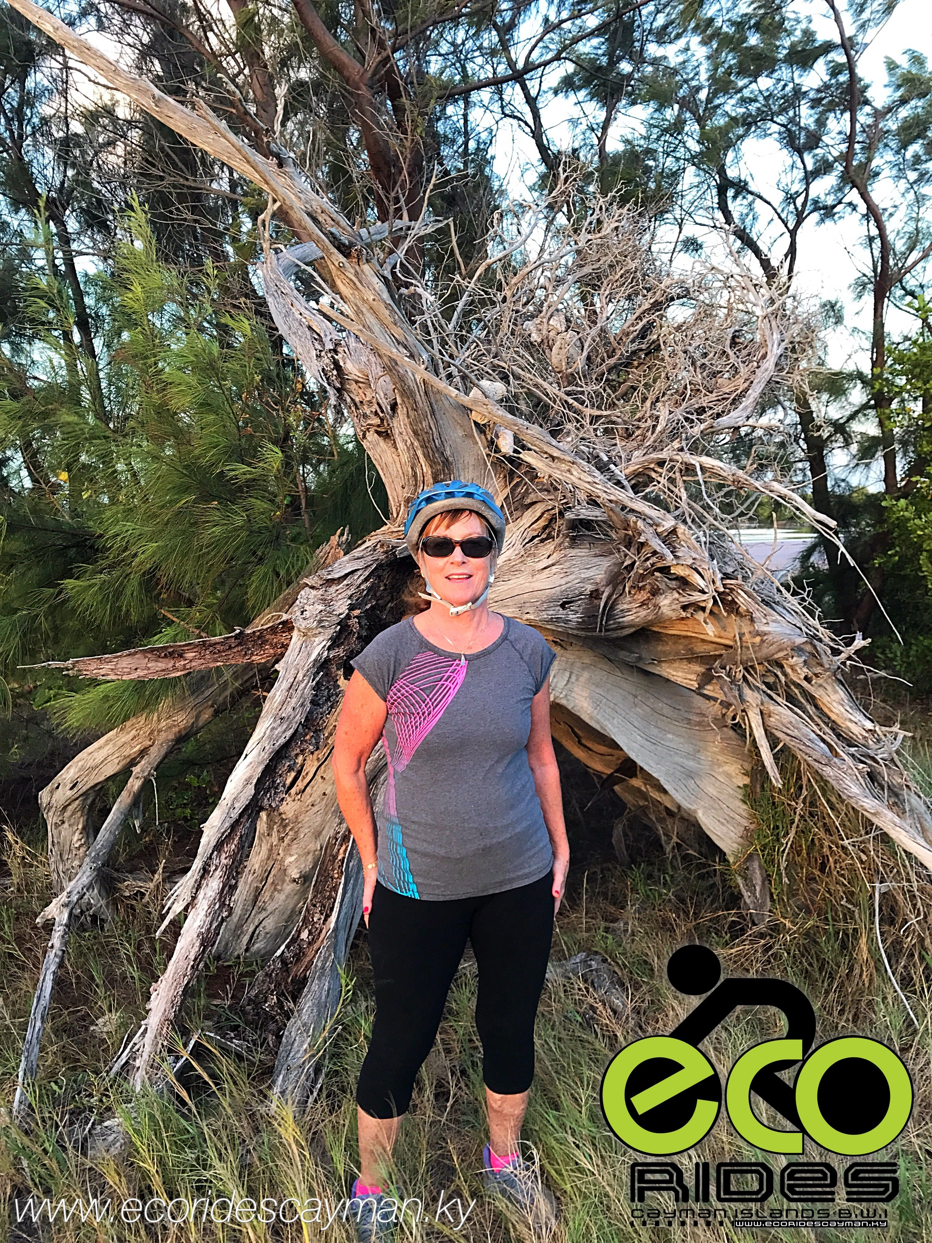Old Tree Stump Left As Remnants Of Hurricane Ivan There Is Lots To See With Eco Rides Cayman