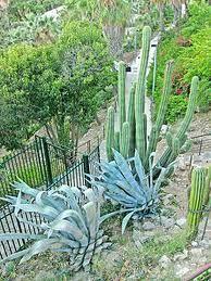 jardines de españa cactus