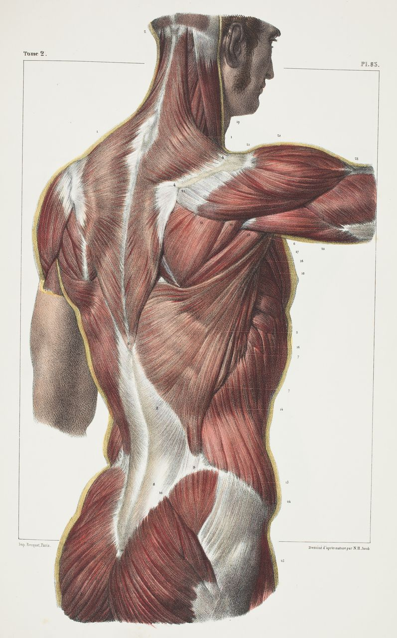 Une Collection Danciennes Illustrations Mdicales Anatomy Human