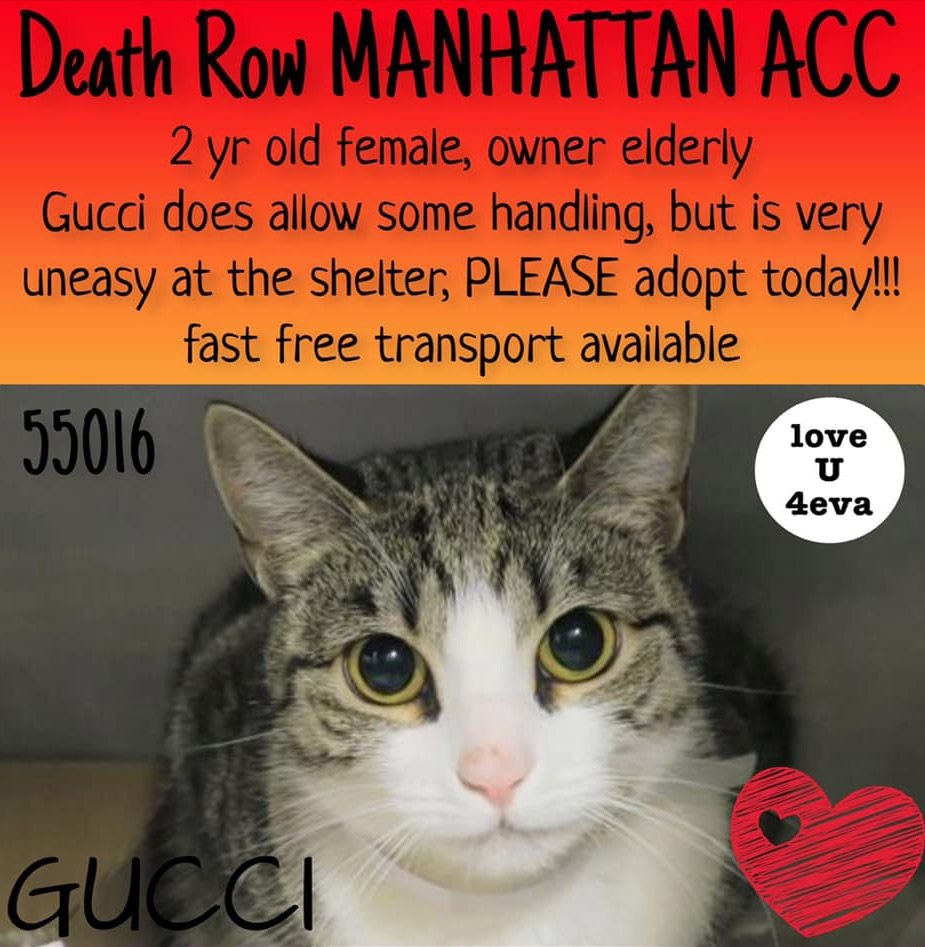 Safe 03 09 19 Tbd Sweetest Baby Girl Gucci Nh Only Cats Dog Safe Cat Today