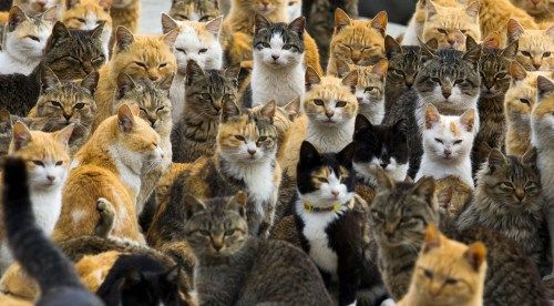 Mews and Nips: Cats Outnumber People on Japan's Cat Islands  aoshima-cat-island