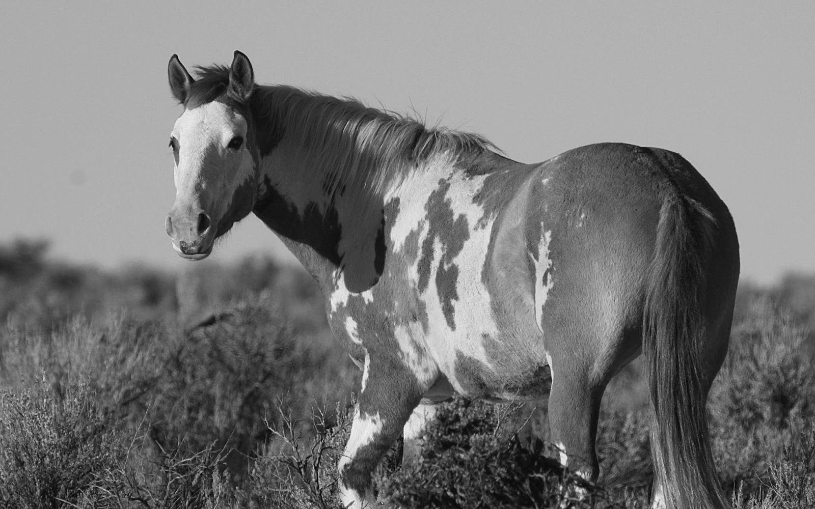 Great Wallpaper Horse Photography - 21ed6bfeba777e6b67d25ced248188c8  Perfect Image Reference_419392.jpg