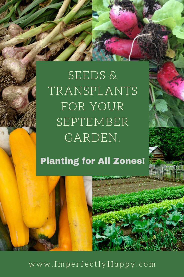 What To Plant In September Your Vegetable Garden And Growing Hns Pinterest Plants