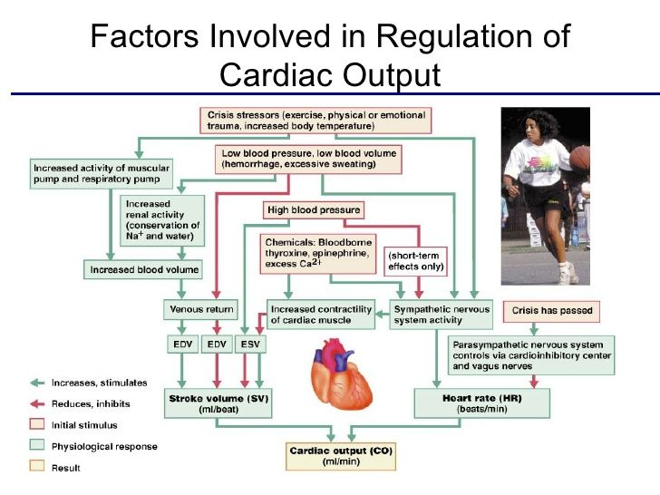 Here Is A Summary Of The Entire Function Of The Heart Including