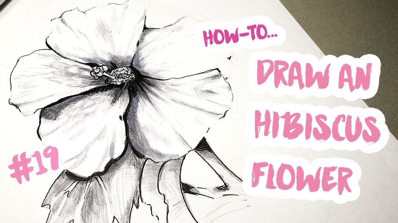How To Draw An Hibiscus Flower A Drawing A Day 19 Tutorial