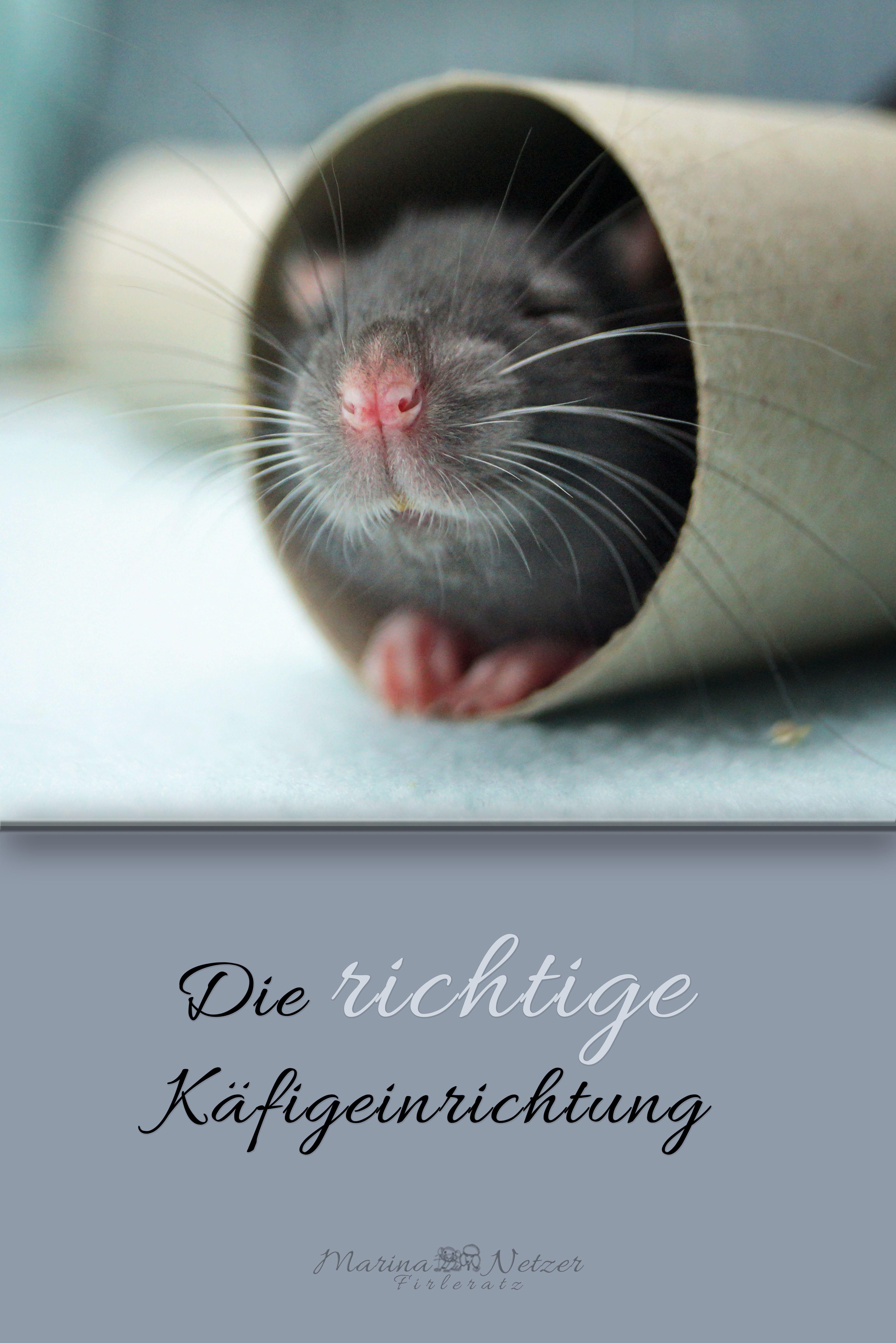 Was Brauchen Ratten Denn Um Sich In Ihrem Kafig Wohlzufuhlen