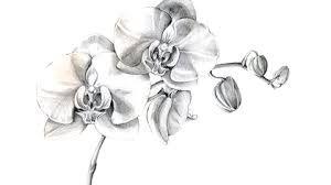 Resultat De Recherche D Images Pour Orchidee Dessin Dessin