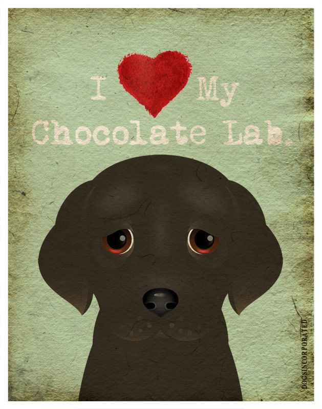 I Love My Chocolate Lab