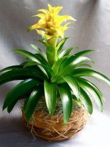 Names Of Indoor House Plants | ... Tropical Indoor Plant Types Indoor  Tropical Plant