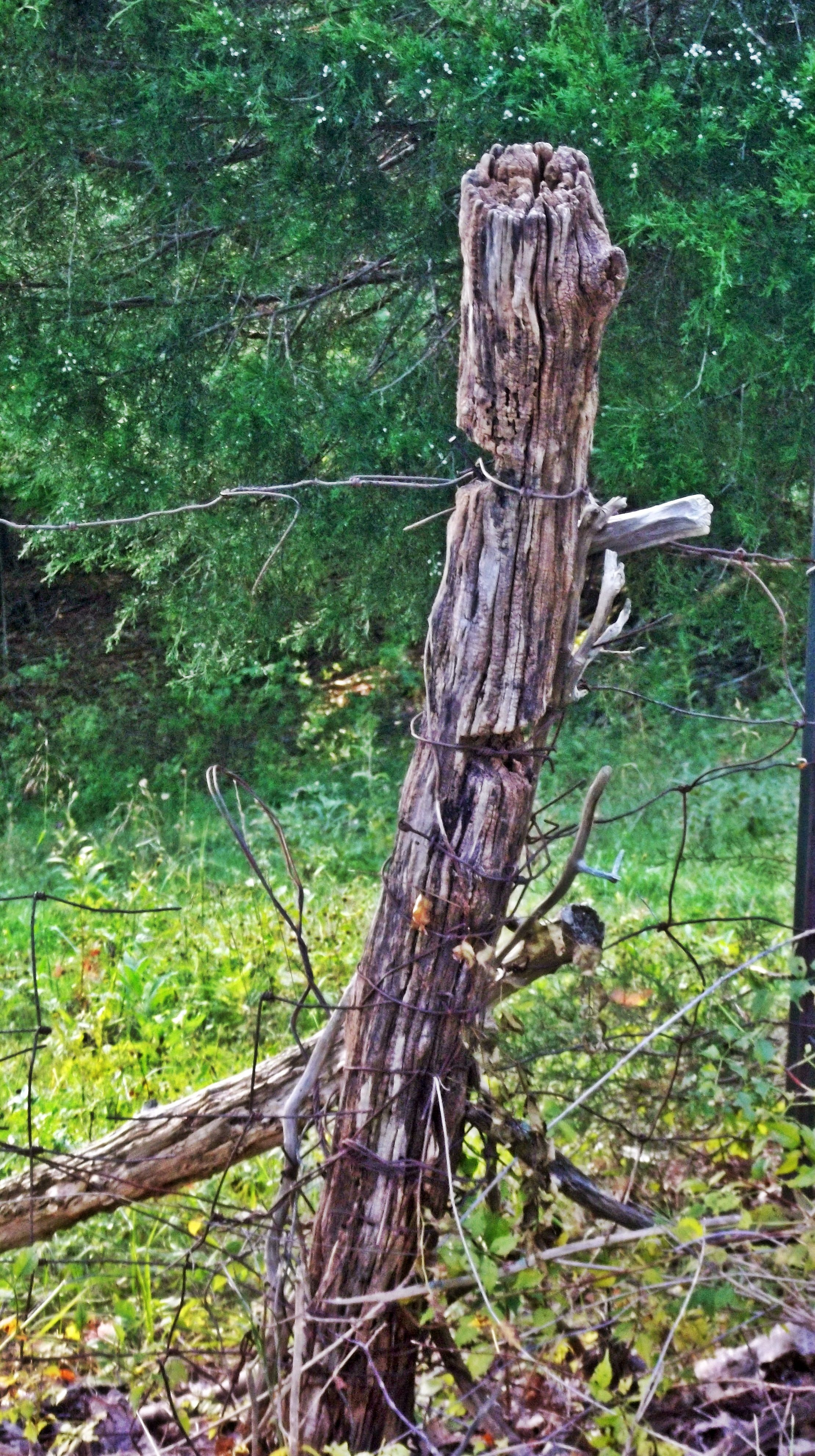 An Old Fence Post Photo By Joy Fussell In 2020 Zaun Natur Wald