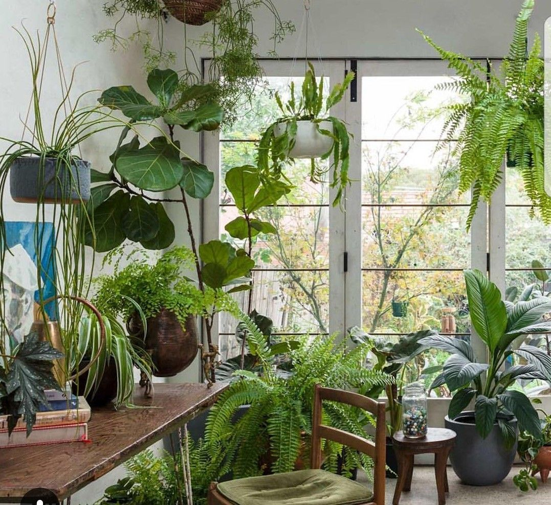 New Best Plants for Sunroom