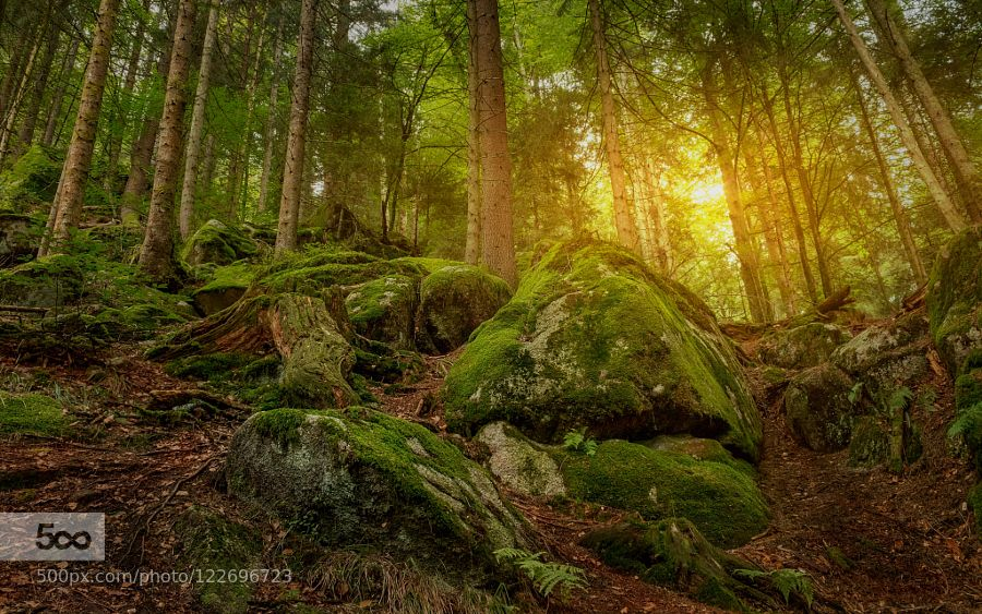 Hobbits Land by andrebauer #nature